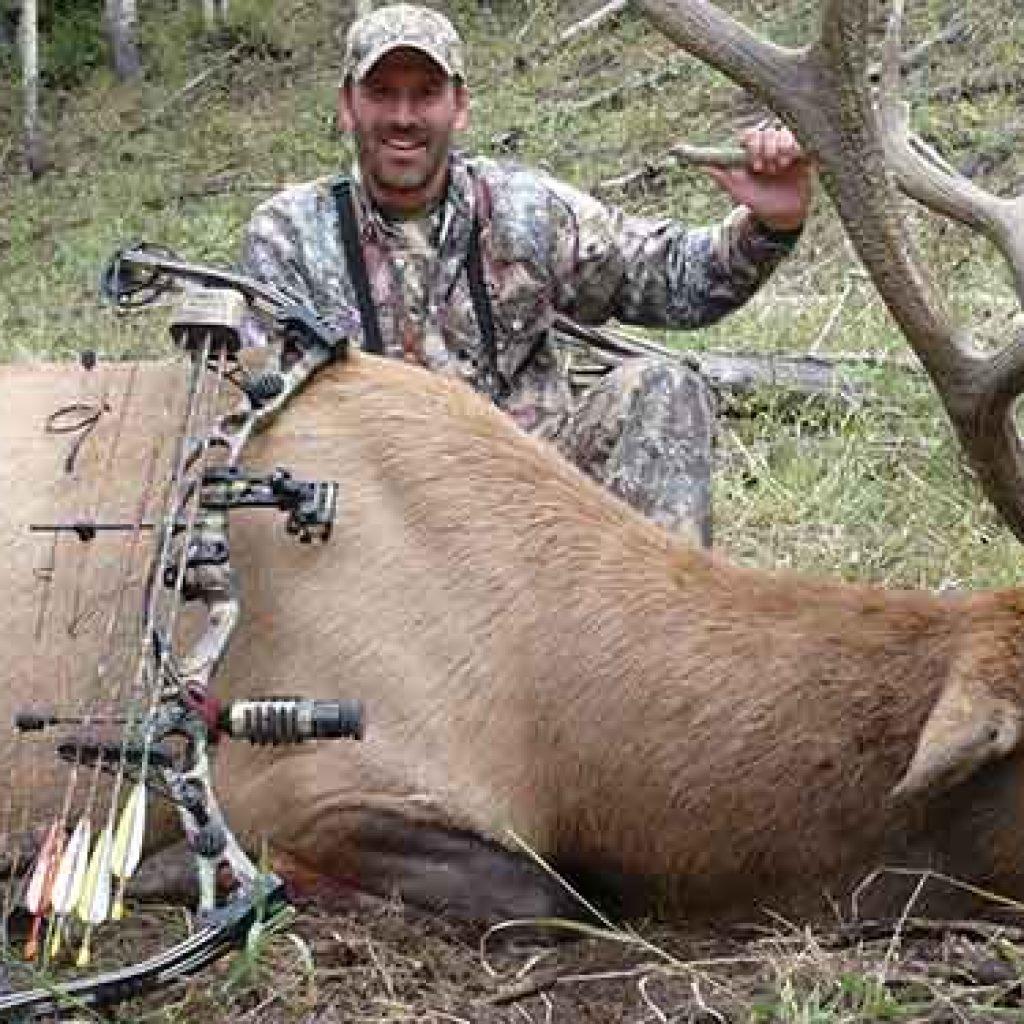 Elk Hunting Tips For Beginners Basics Of Hunting Elk